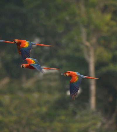 destinations-amazon-rainforest-macaw